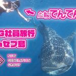 【セブ島】大手ホストクラブの社員旅行【NGG】