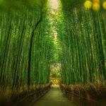 京都にホスト求人はある?どこが栄えているのか